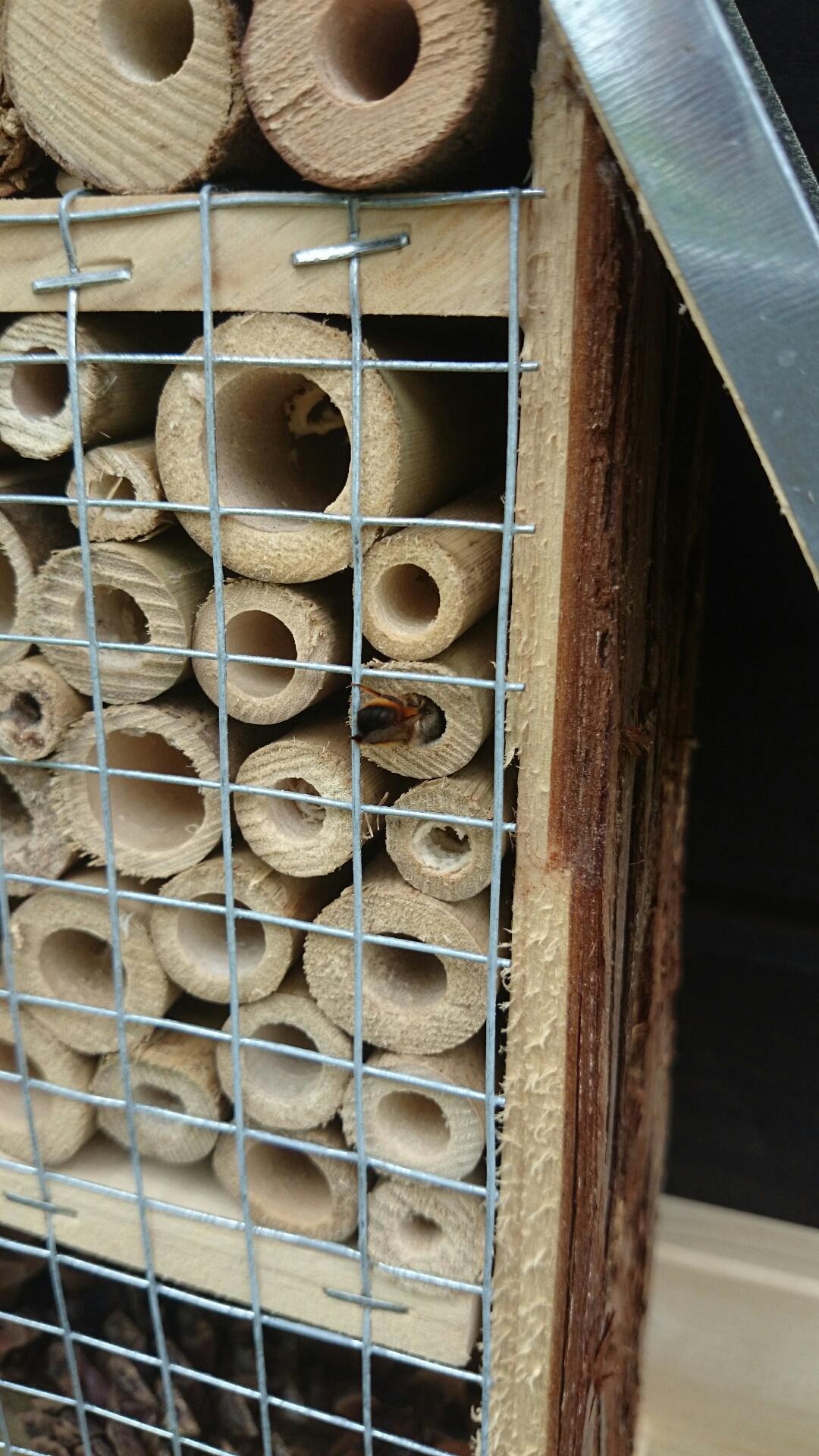 Das Insektenhotel ist schon bewohnt
