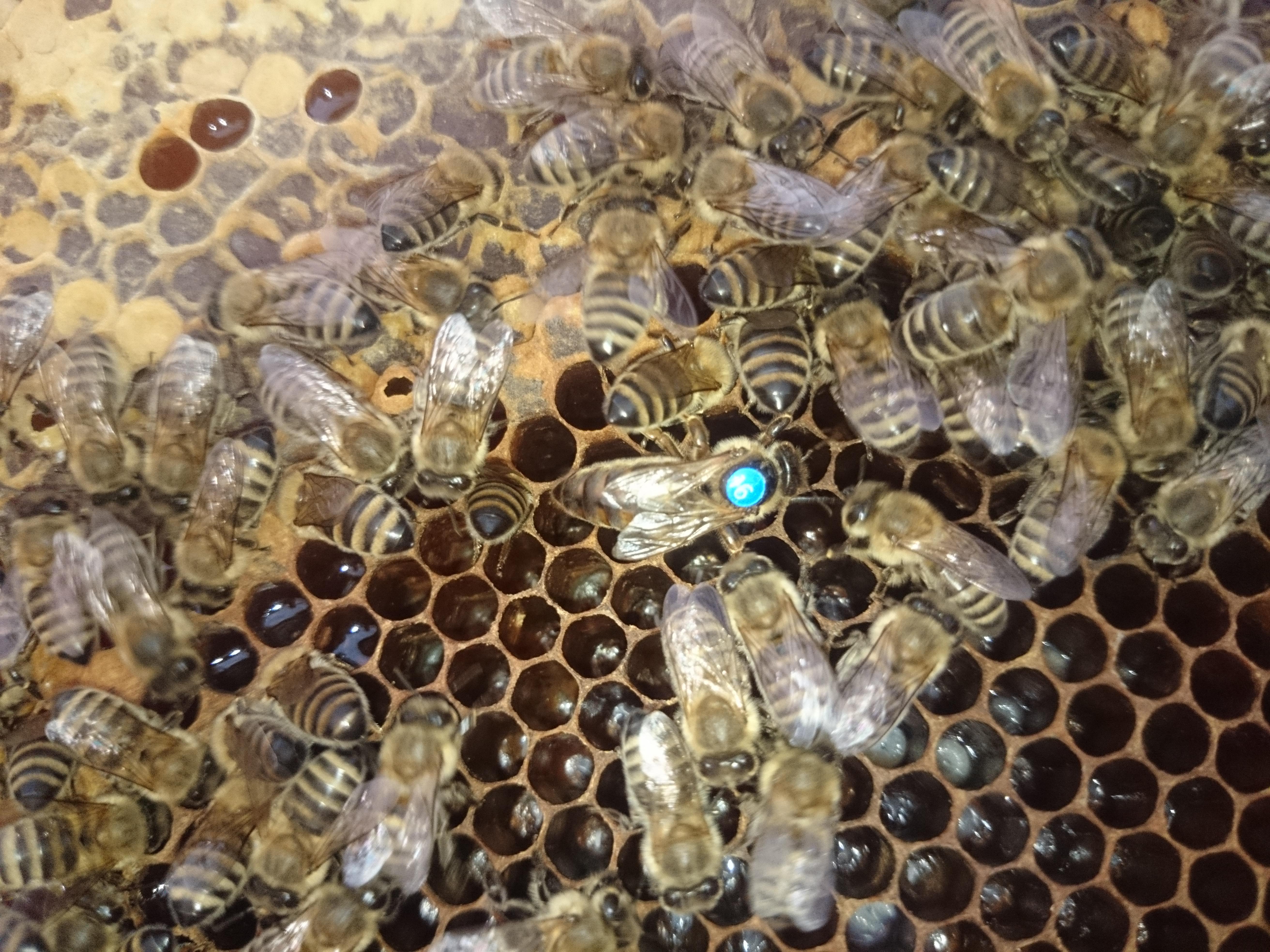 Bienen-Bilder Ausgabe #2 / Bienentagebuch #1